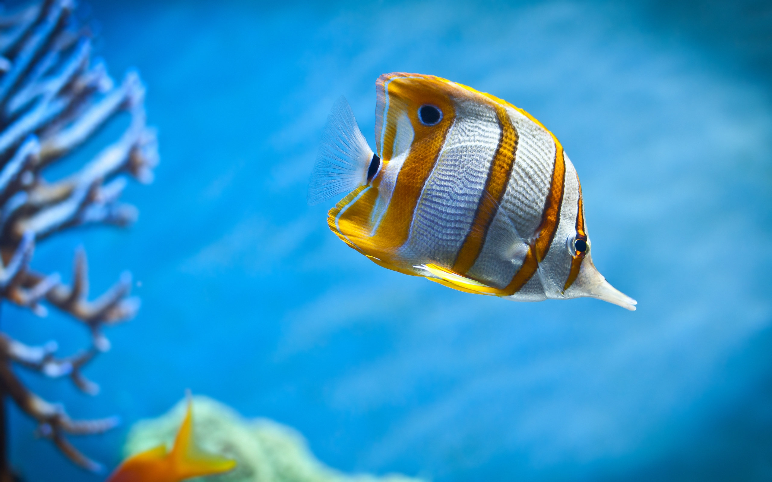 65+ Most Beautiful Fishes from Deep Blue Sea for your Aquarium